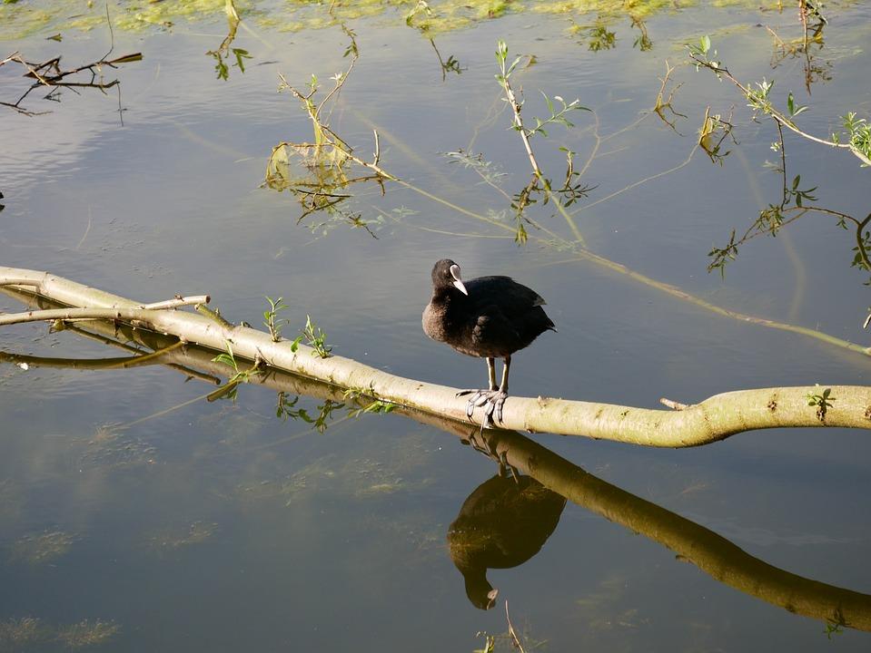 Bird, Water, Tree