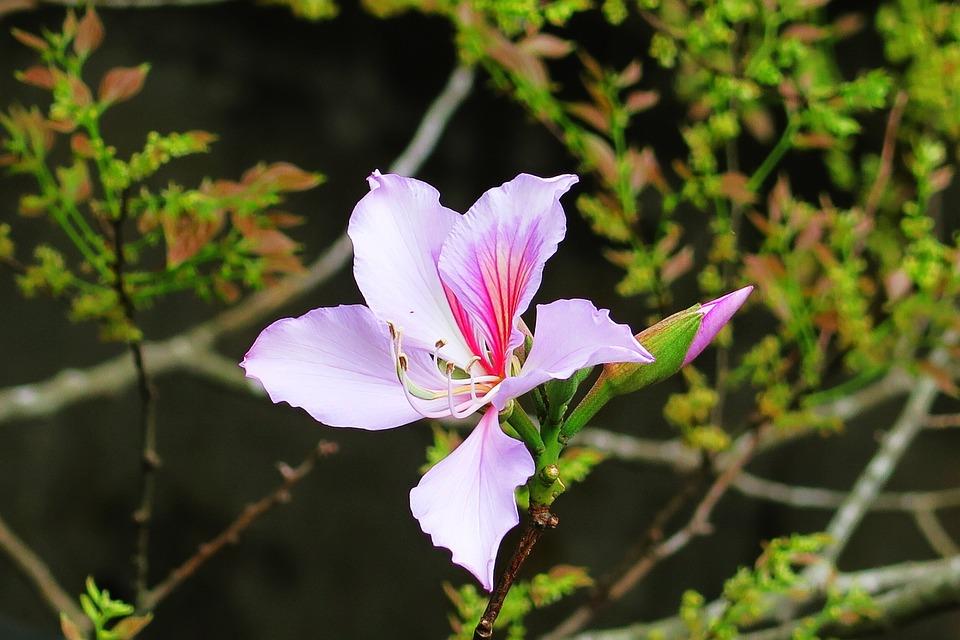 Flower, Nature, Plant, Leaf, Garden, Bloom, Tree