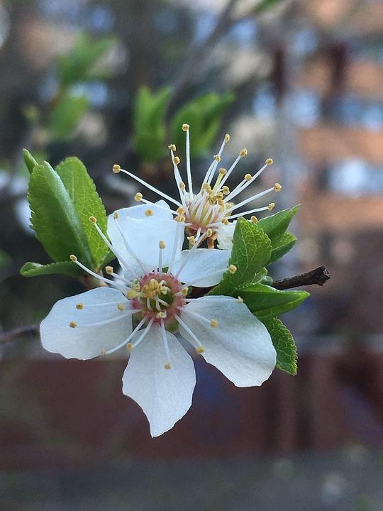 Flower, Nature, Plant, Leaf, Tree, Blossom, Bloom