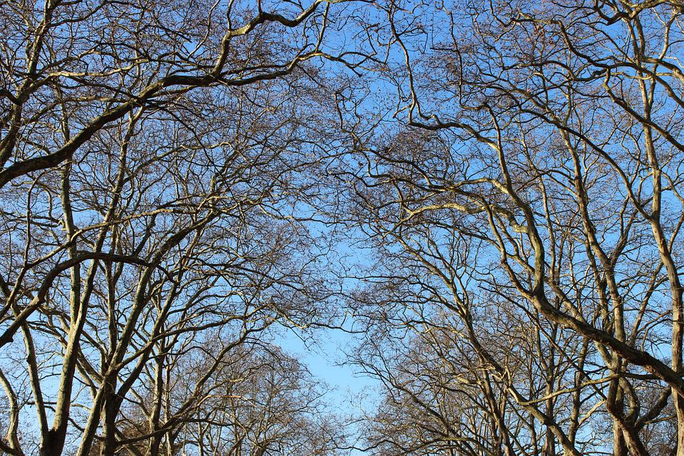 Sky, Branches, Blue, Tree, Autumn