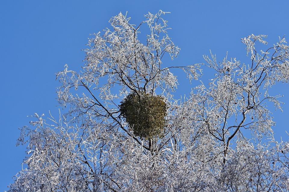 Blue Sky, Tree, Winter, Frost, Hoarfrost, Nature, Crown