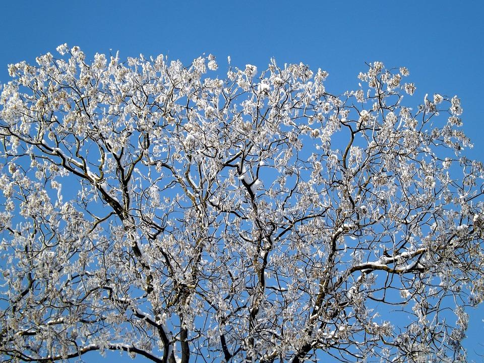 Tree, Snow, Frozen, Top, Sky, White, Winter, Blue