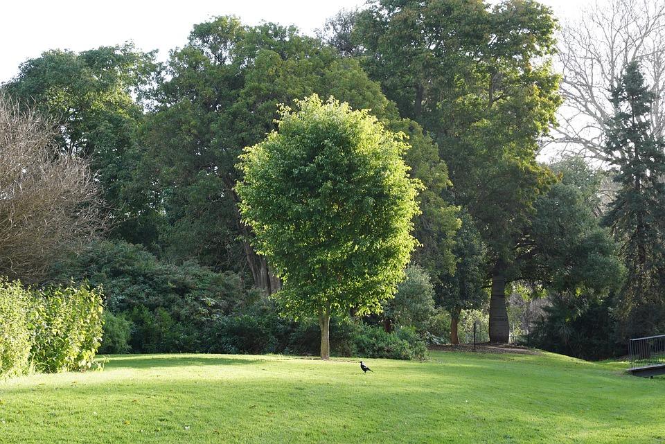 Tree, Botanical Garden, Winter Sunshine