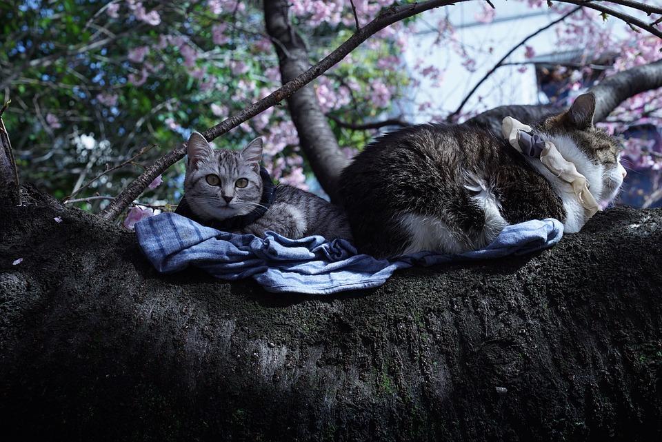 Cats, Sunning, Tree Branch, Enjoy The Sunshine, Japan