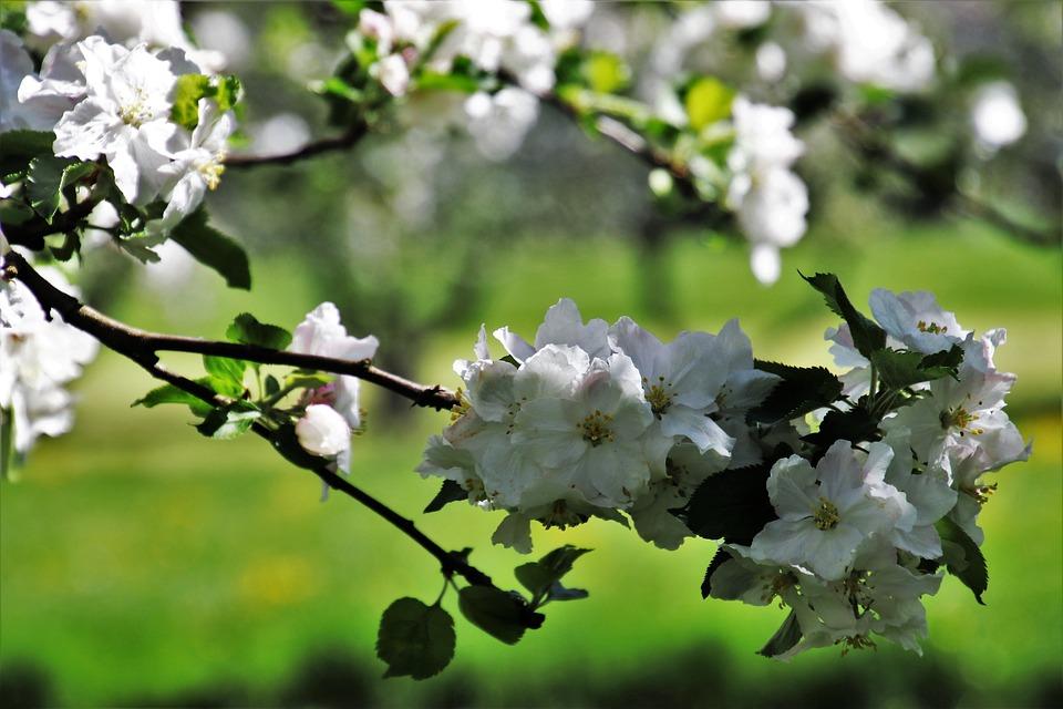 In The Garden, Spring, Flower, Tree, Plant, Branch