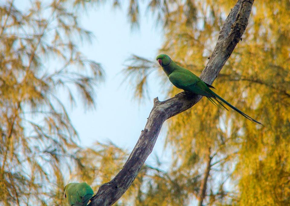 Birds, Parrots, Branch, Tree, Wildlife, Nature