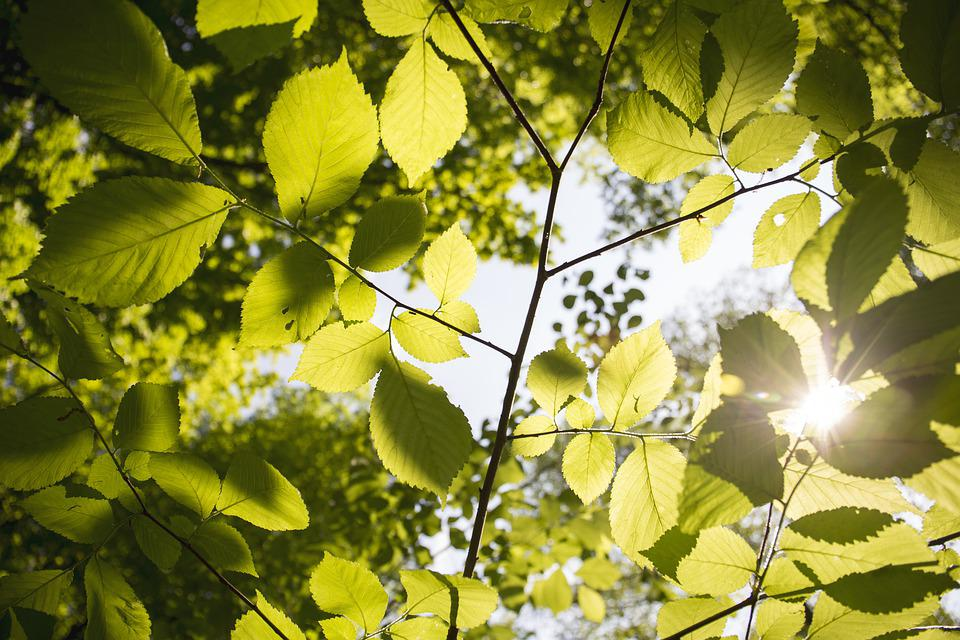 Leaves, Flora, Tree, Branch, Park, Outdoors, Sunny