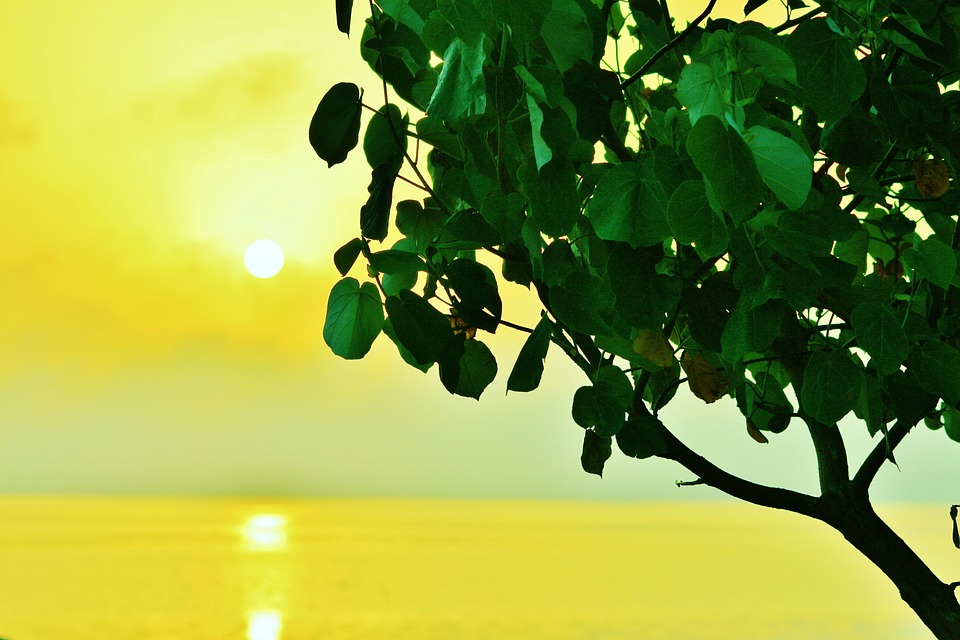 Shades, Tree, Branch, Silhouette, Leaves, Backlit, Sun