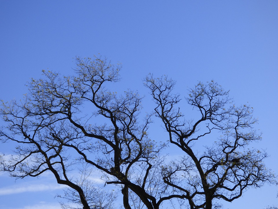 Sky, Blue, Branches, Branch, Tree, Nature