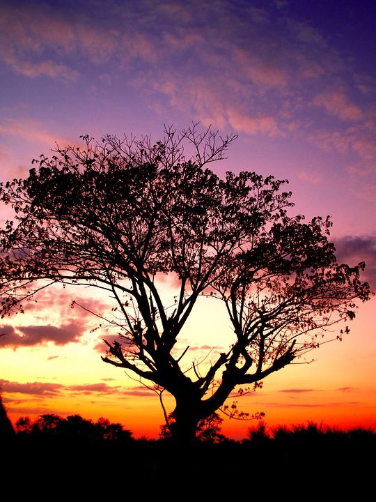 Tree, Branches, Tree Silhouette, Black, Forest