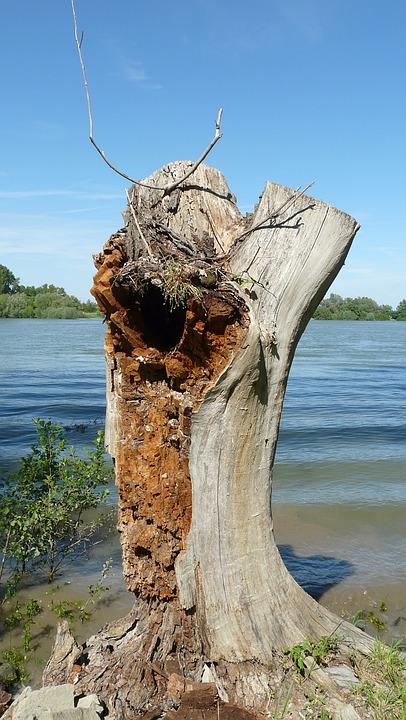 Tree Stump, Tree, Weathered, Old, Log, Broken, Dead