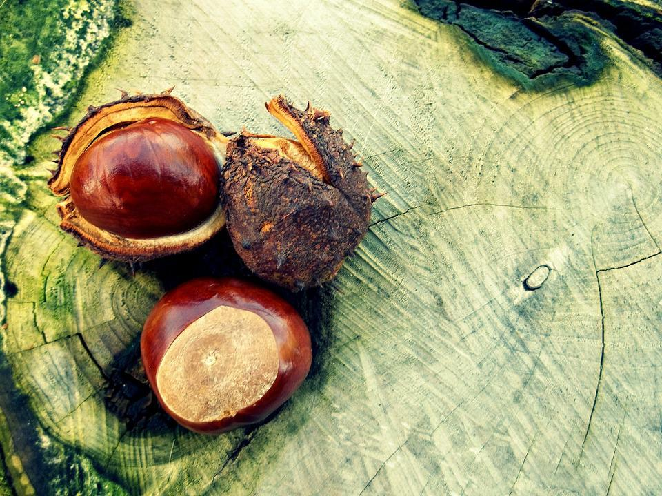 Chestnut, Autumn, Tree, Brown, Shell, October, Spur