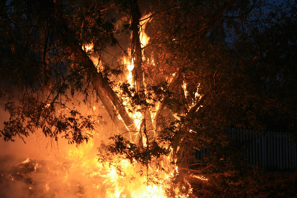 Evening, Outdoors, Fire, Spreading, Smoke, Tree Burning