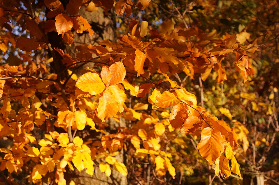 Tree Bush Autumn Leaves Golden Autumn Aesthetic 2743052