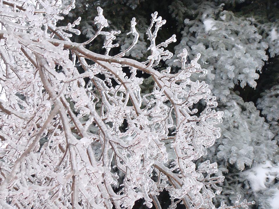 Tree, Frost, Winter, Permafrost, Canada, Ontario, Snow