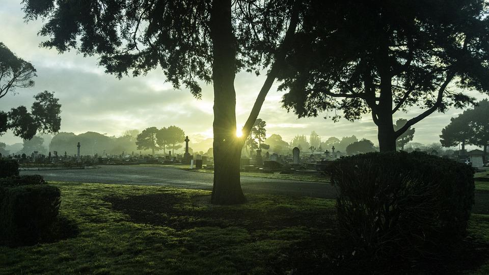 New Zealand, Tree, Cemetry, Sky