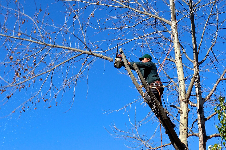 Tree, Woodcutter, Chainsaw, Pruning, Trimming, Felling