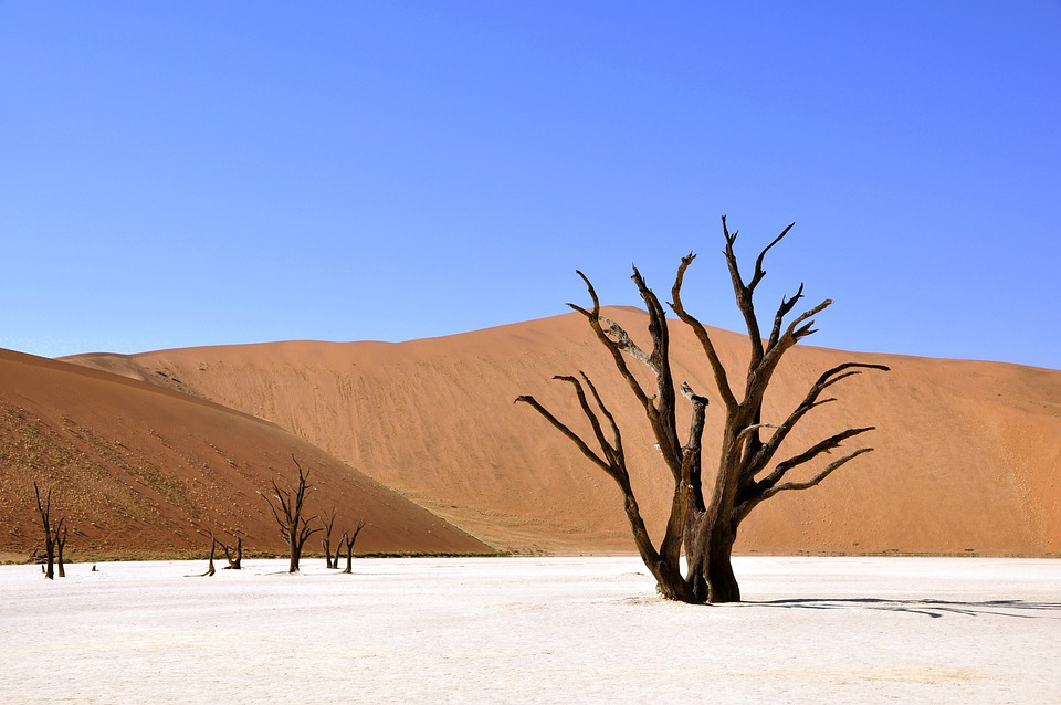 Tree, Desert, Namibia, Clay Pan, Drought, Africa, Dry