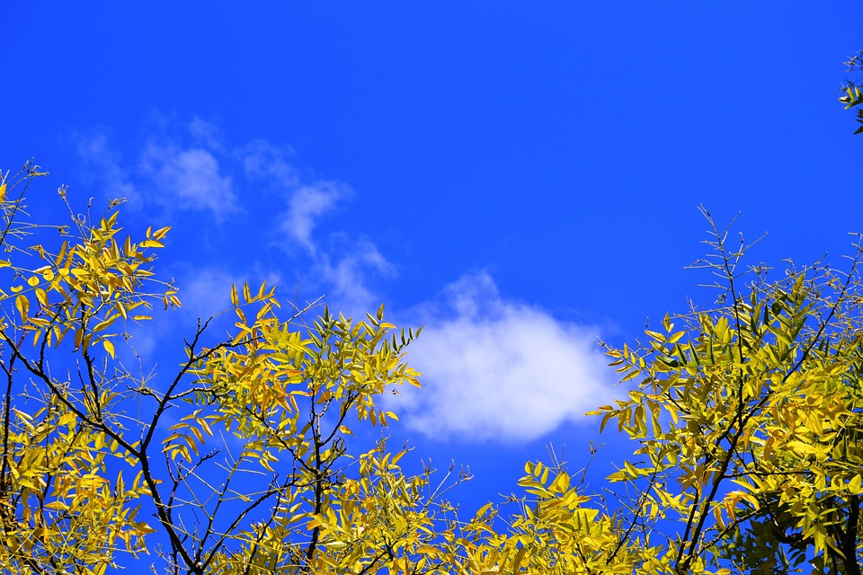 Branch, Yellow, Tree, Sky, Clouds, Blue