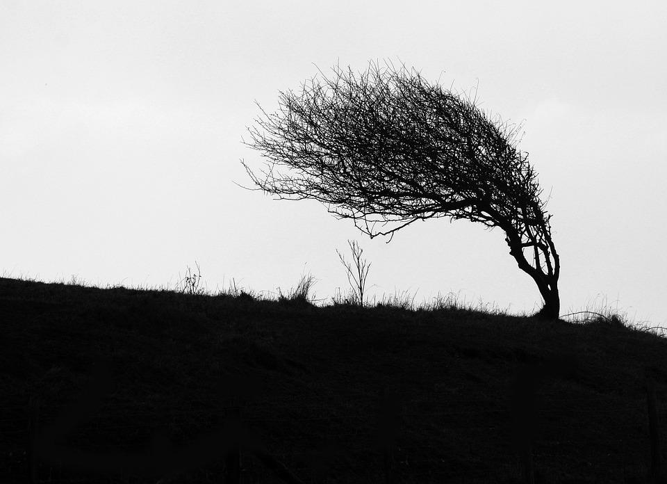 Windswept, Tree, Cliff Top, Coastal, Landscape