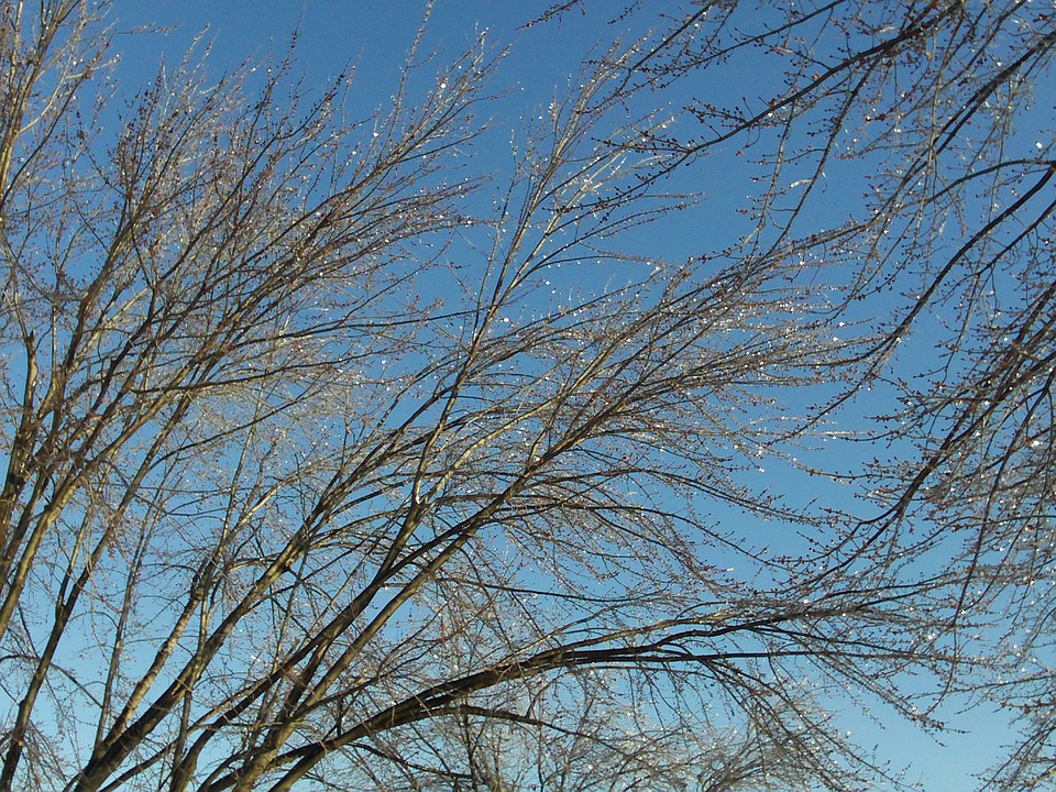 Tree, Branches, Ice, Nature, Cold, Winter, Sky, Up
