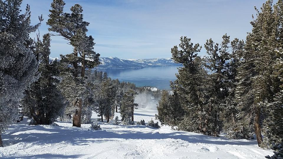 Snow, Winter, Cold, Wood, Tree, Lake Tahoe, Blue Wood