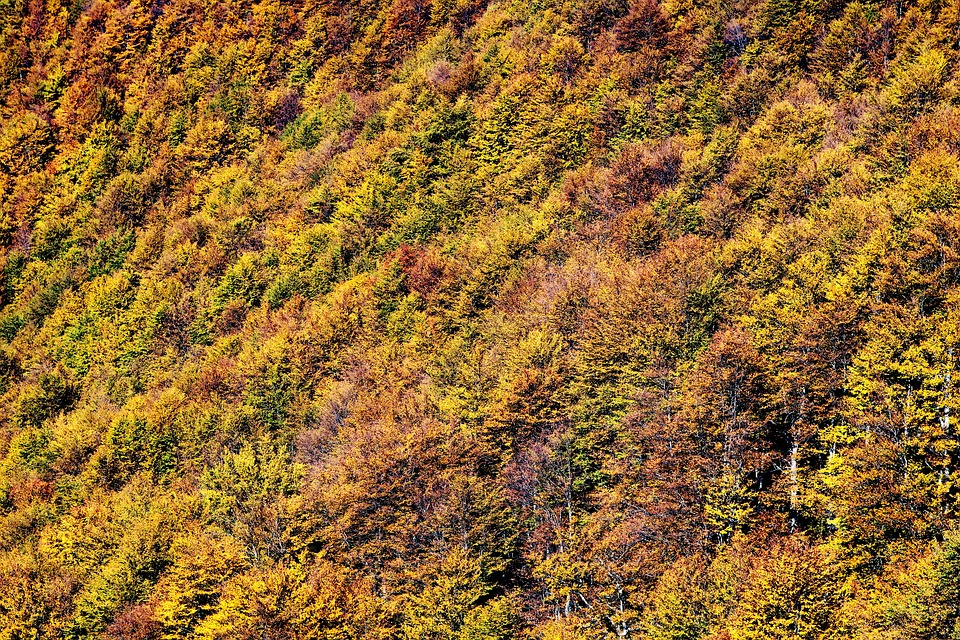 Forest, Autumn, Tree, Beech Wood, Hand, Color, Leaves