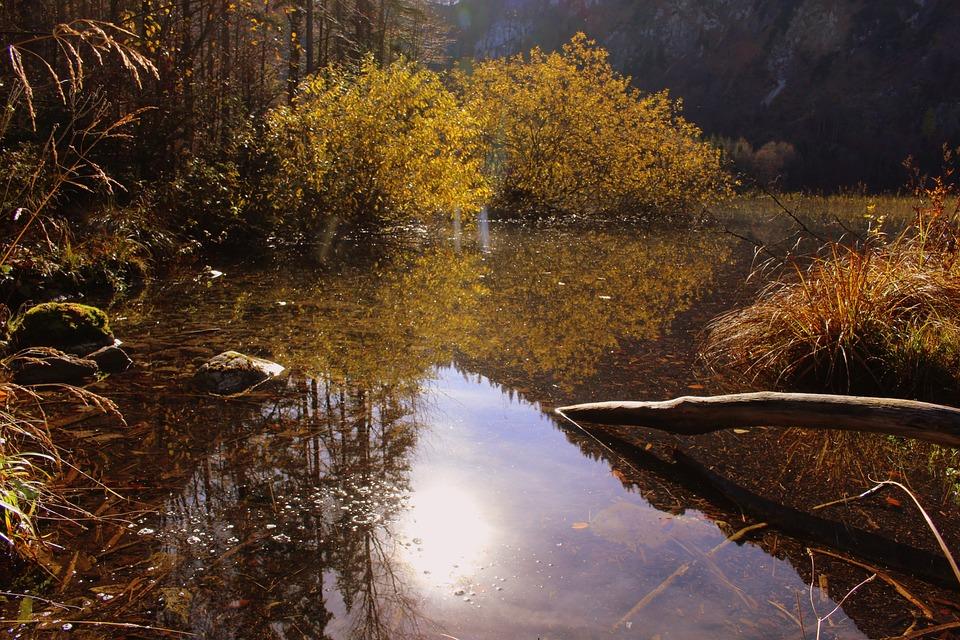 Sun, Autumn, Color, Mood, Landscape, Nature, Tree