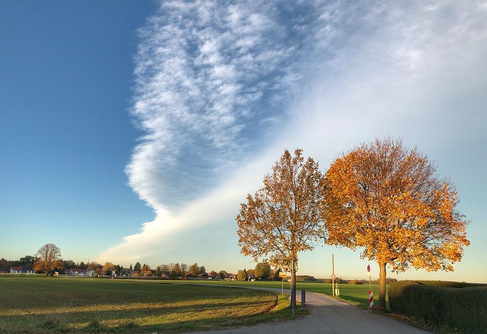 Autumn, Tree, Nature, Landscape, Mood, Colorful