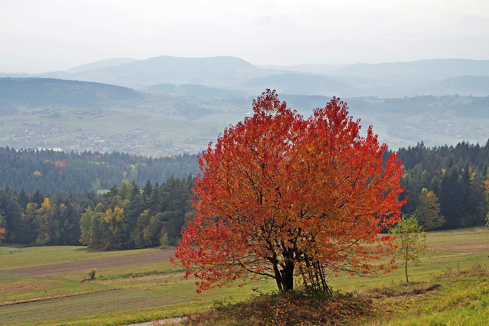Mountains, Autumn, View, Nature, Tree, Colors, Tops