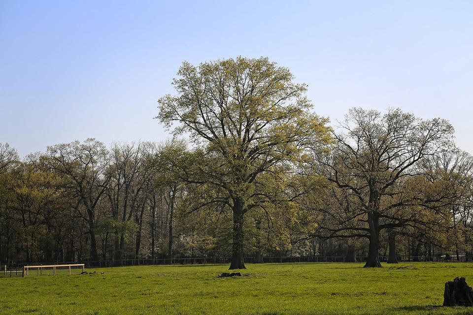 Tree, Nature, Landscape, Grass, Wood, Countryside