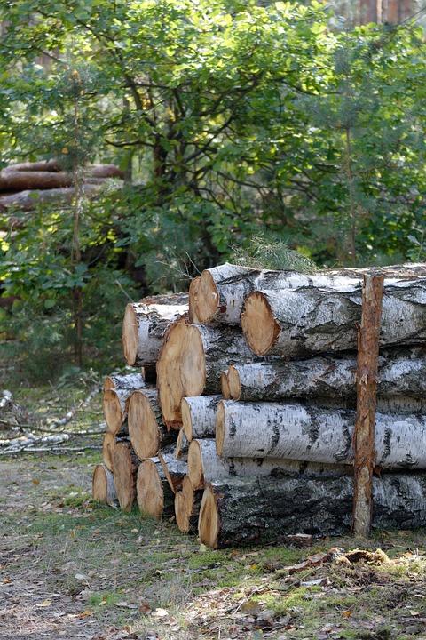 Wood, Bale, Felling, Tree, Forest, Slice, Cut, Cutting