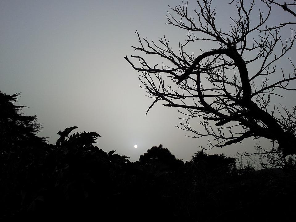 Darkness, Gloomy, Dark, Tree, Night, Sunset