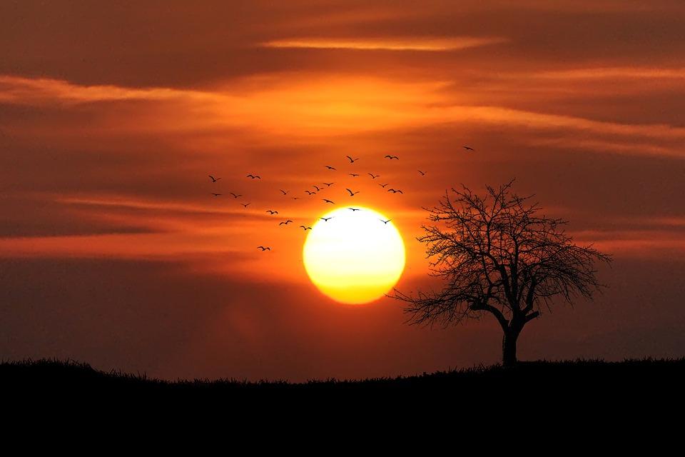 Sunset, Tree, Dusk, Dawn, Red, Glow, Romantic, Warm