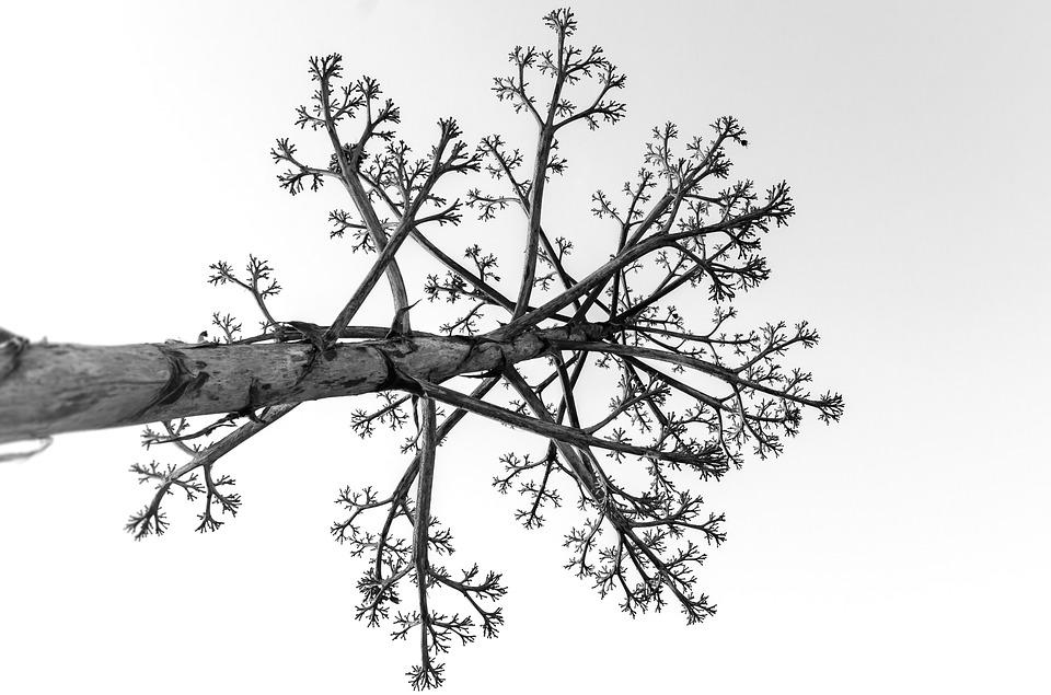 Tree, Dead, Wood, Old, Landscape