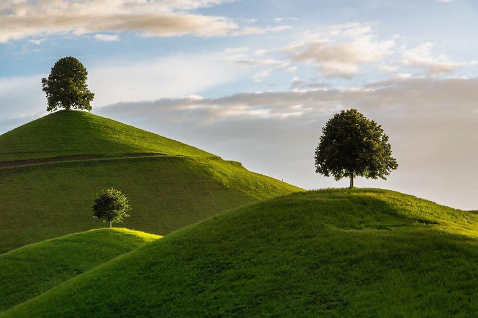 Hill, Tree, Drumlin, Landscape