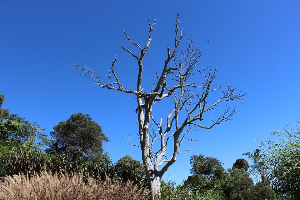Tree, Dry, Nature