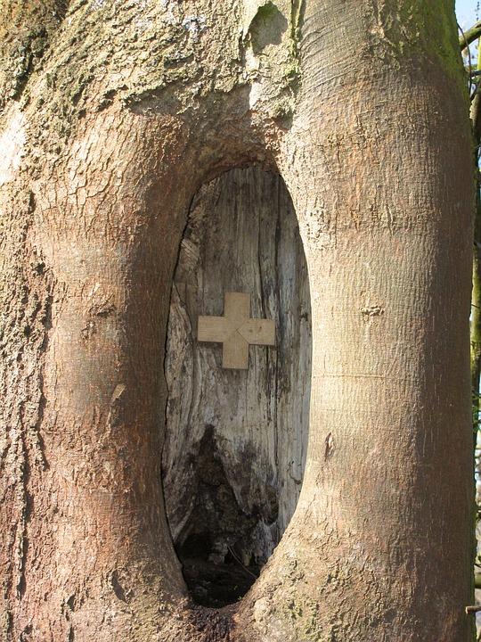 Knothole, Tree, Scar, Cross, Close, Christian, Faith