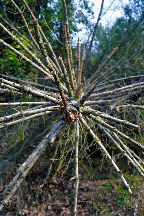 Trunk, Roots, Nature, Trees, Tree, Broken, Fallen