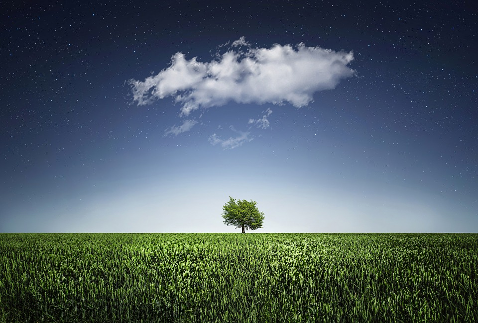 Tree, Natur, Nightsky, Cloud, Stars, Field, Countryside