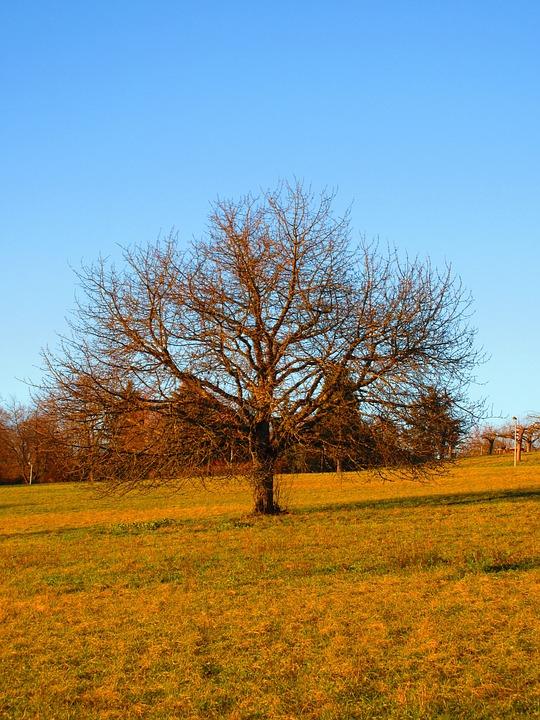Landscape, Meadow, Tree, Autumn, Fall, Field