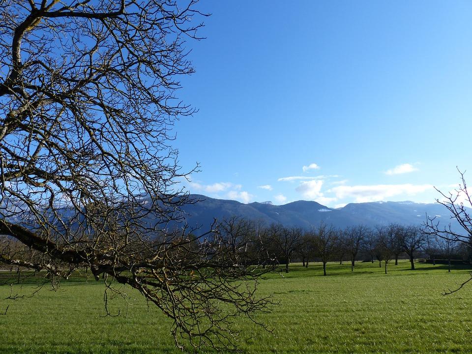 Landscape, Tree, Field Walnut
