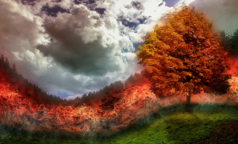 Fire, Brand, Forest Fire, Flame, Tree, Meadow