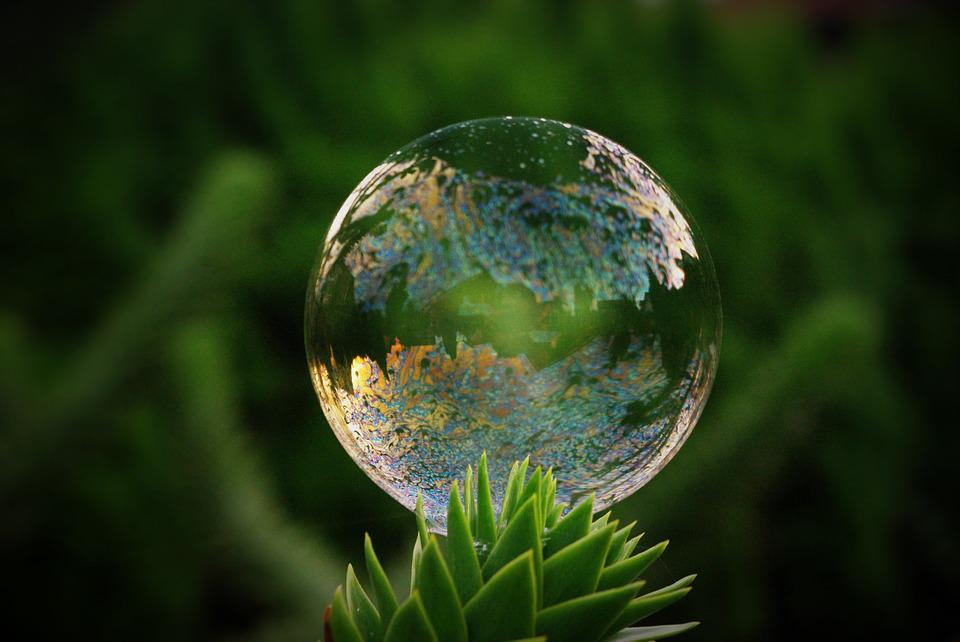 Soap Bubble, Tree, Mirroring, Colorful, Shimmer, Float