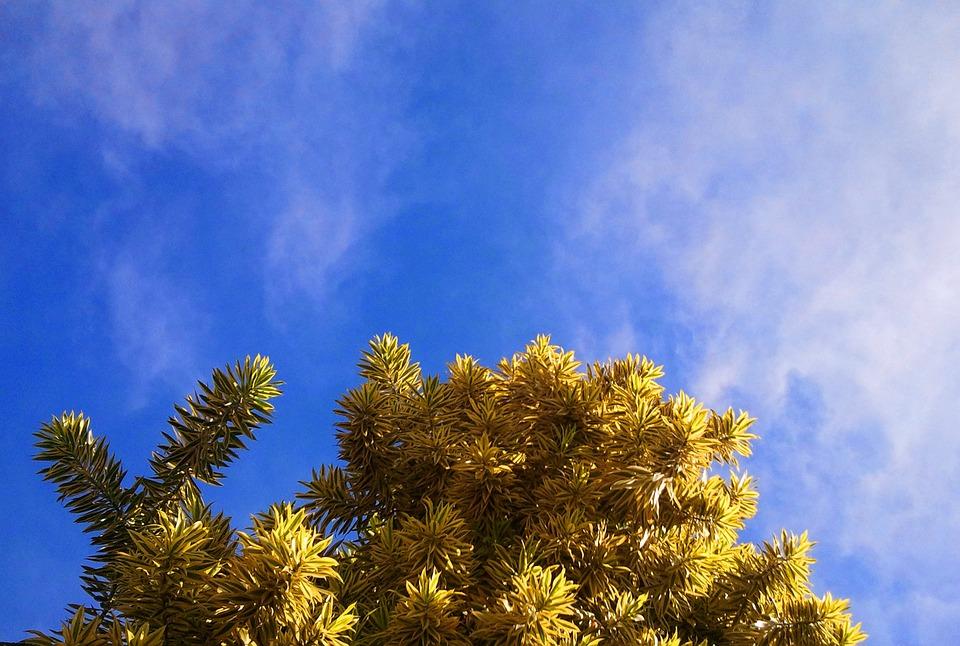 Tree, Canopy, Leaves, Foliage, Plant, Sky, Blue, Flora