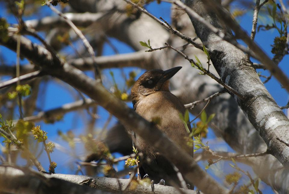 Bird, Tree, Nature, Branch, Spring, Leaf, Plant, Flower