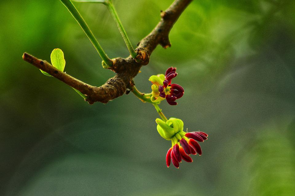 Flower, Red, Tree, Bud, Beautiful, Landscape, Natural
