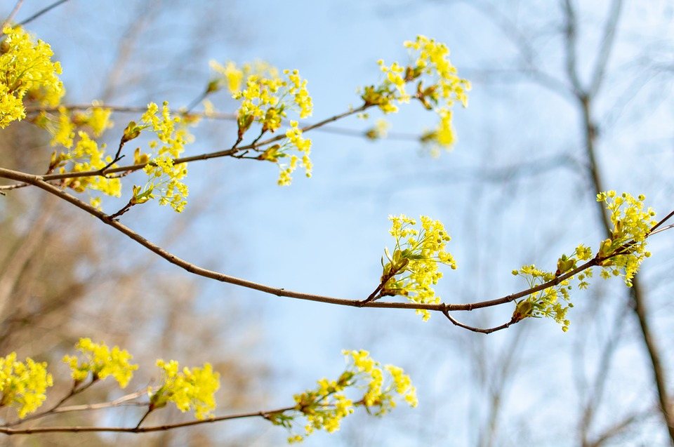 Tree, Flowers, Blooms, Yellow, Nature, Spring, Flower