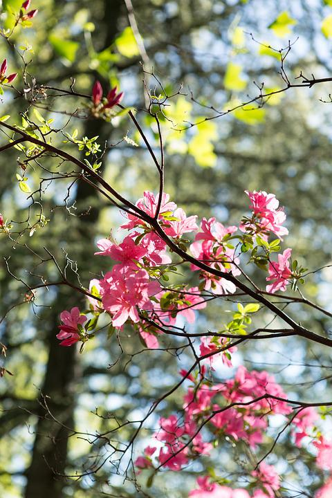 Free Photo Tree Flowers Nature Branch Spring Trees Bloom Max Pixel