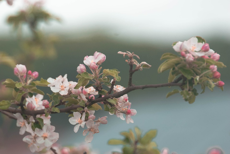 Spring, Blossom, Nature, Flowers, Pink, Tree